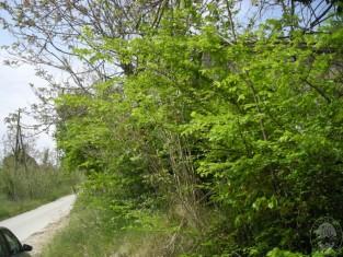 San Vito Chietino- Rudere su strada - vista da strada (2).JPG