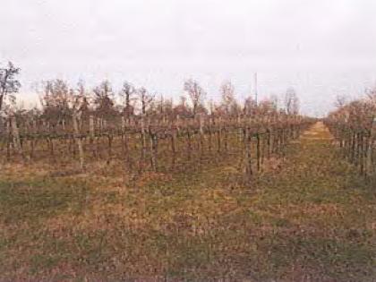 Fig 2 - Lotto 3: Terreno Agricolo