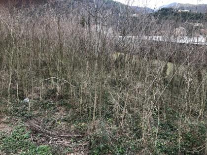 Fig 1 - Fig 2 - Terreno agricolo in CAGLI, loc...