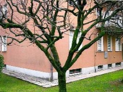Fig 1 - Fig 1 - Lotto: Appartamento al p. rial...