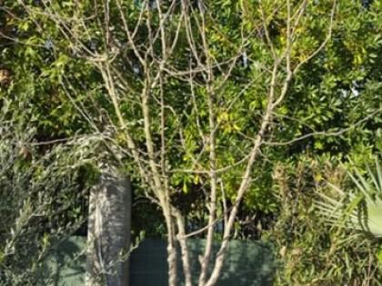 Fig 1 - Fig 1 - piante - pt - 8246